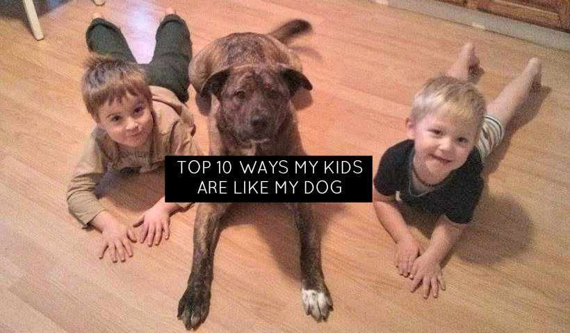 Top 10 Ways that my kids are like my dog